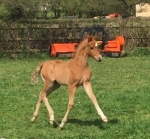 The first foal of the year is born!