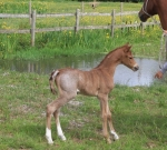 Foal number 4!