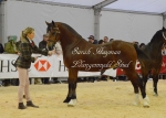 Royal Welsh Winter Fair