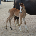 The third foal is born!