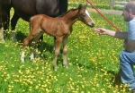 Our Last foal